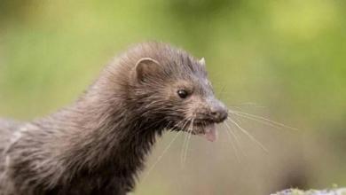 """صورة """"دراسة صادمة"""" بشأن انتقال كورونا من الحيوانات للبشر"""