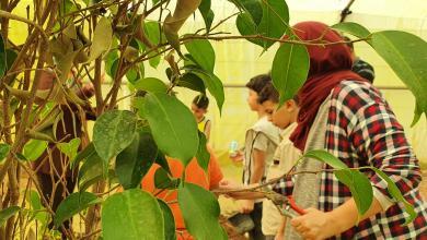 صورة بالصور.. مؤسسة أهلية تُدمج الأطفال في برنامج لتشجير الجبل الأخضر