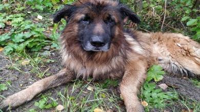 صورة كلب ينجو من الموت بعدما دفنته صاحبته حياً